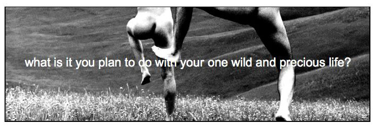 what-u-plan-4-1-wild-life